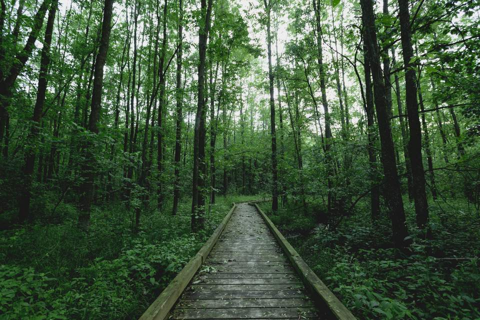 Boardwalk across lush forest, Marshfield, Wisconsin, USA