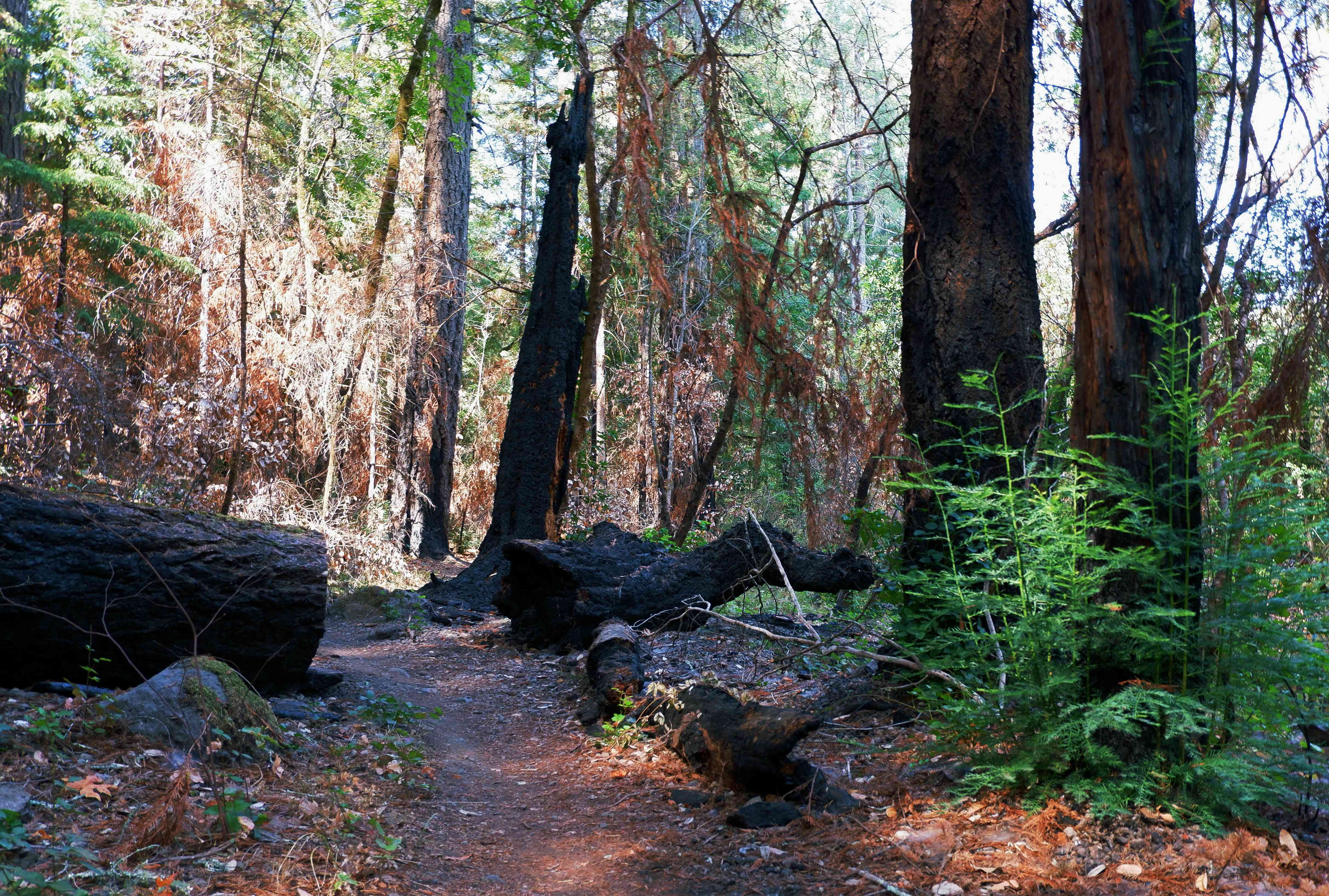 Redwood Trail in Bothe State Park, Napa Valley, California.