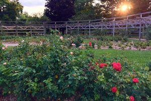 Whetstone park of roses in Columbus Ohio