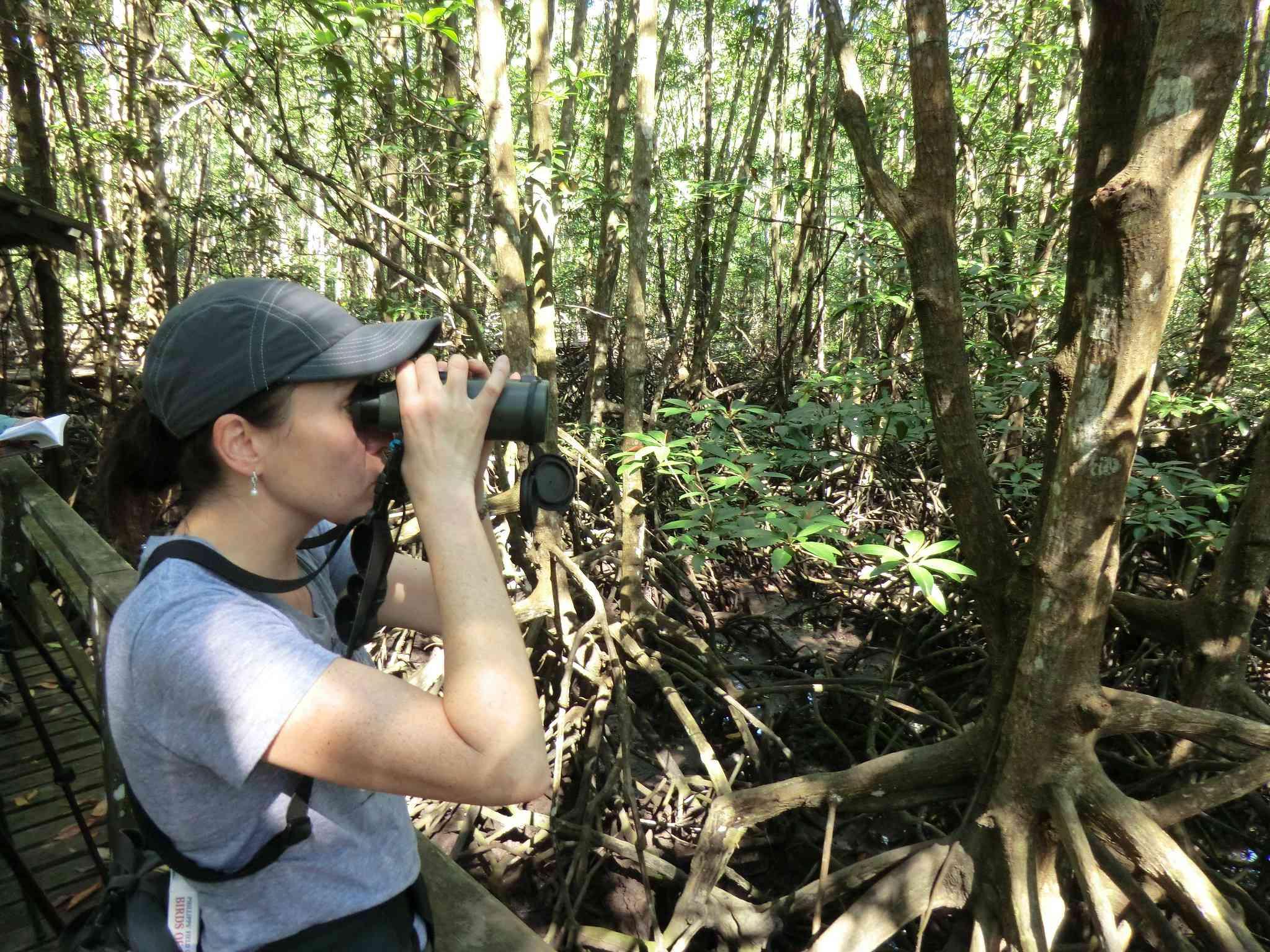 Birding the mangroves of the Kota Kinabalu Wetlands Centre