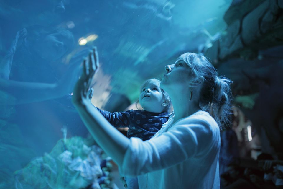 Girl on mother shoulders admiring aquarium